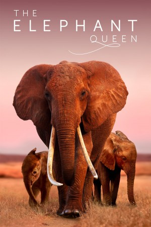 大象女王 The Elephant Queen (2018)