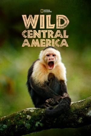 野性中美洲  Wild Central America (2000) 中文字幕