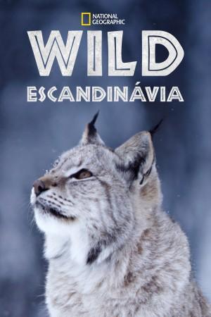 北欧野生风情录 Nordic Wild (2012) 中文字幕