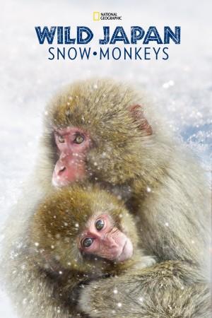 Wild Japan: Snow Monkeys (2014) 中文字幕