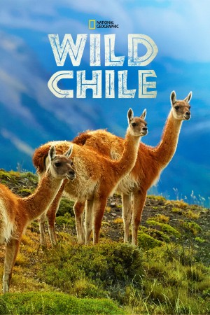 狂野智利 Wild Chile (2018) 中文字幕