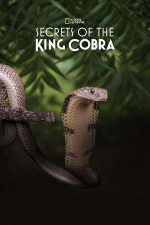 眼镜蛇王的秘密 Secrets of the King Cobra (2010) 中文字幕