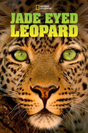 国家地理:豹的眼睛 National Geographic: Eye of the Leopard (2006) 中文字幕