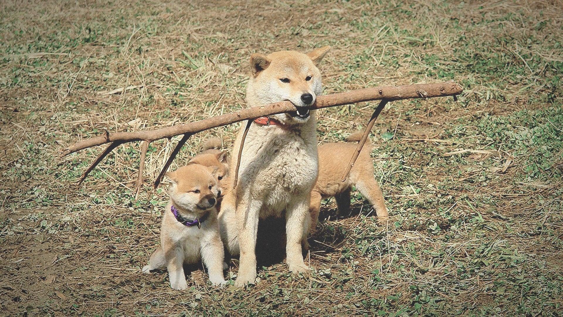 爱犬的奇迹 マリと子犬の物語 (2007) 中文字幕